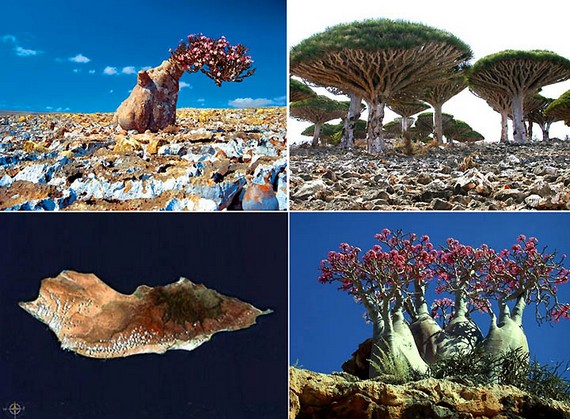 socotra-collage