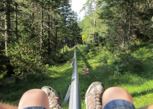 Mieders Alpine Coaster 2