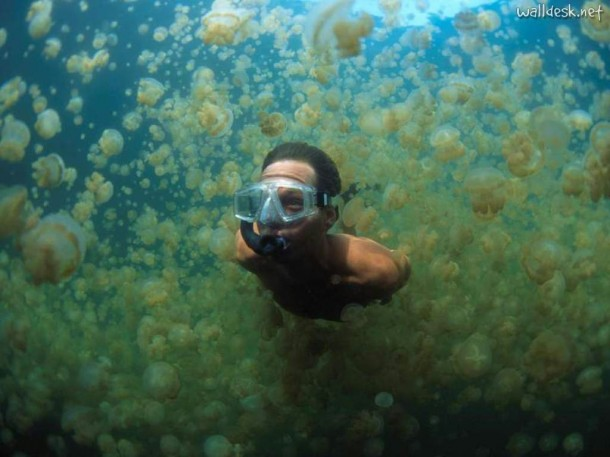 Cheap Cool Stuff >> You Jellin'? Swim with the Golden Jellyfish at Jellyfish Lake - The AdvenTourist