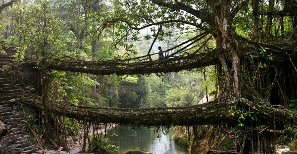 Cherrapunji India living bridge