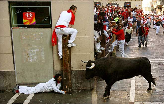 bull-hiding