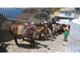 Explore the Island of Santorini on a Mule Ride