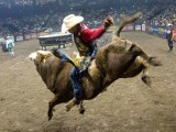 Why Do Some Bull Riders Prefer to Wear a Hat Instead of a Helmet