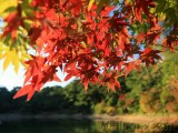 Five Quick Tips for Autumn Travel