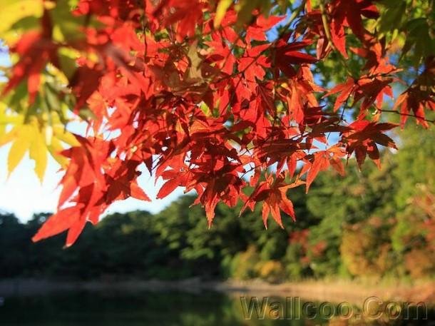 Japan_Rokkosan_autumn_scenery_2005