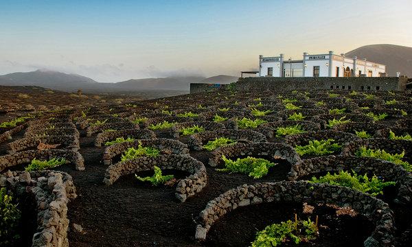 la-geria-vineyards-lanzarote-spain-5
