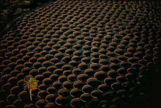 la geria vineyards lanzarote spain