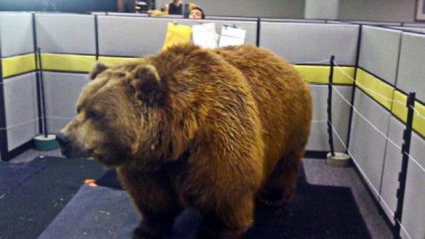 bear in cubicle