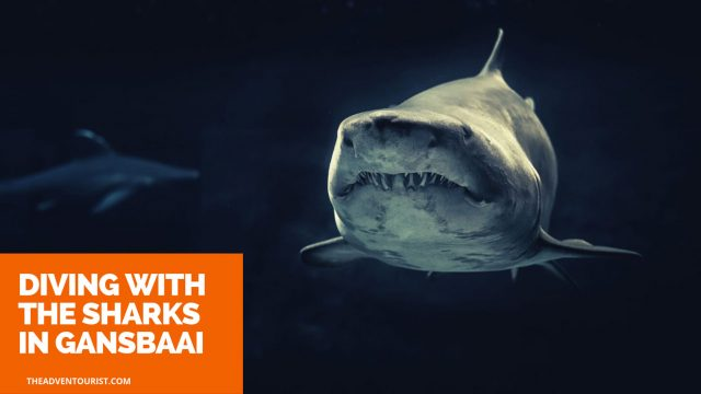 Diving Sharks Gansbaai