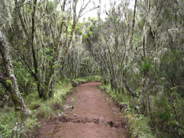 ascension-al-kilimanjaro-ruta-marangu