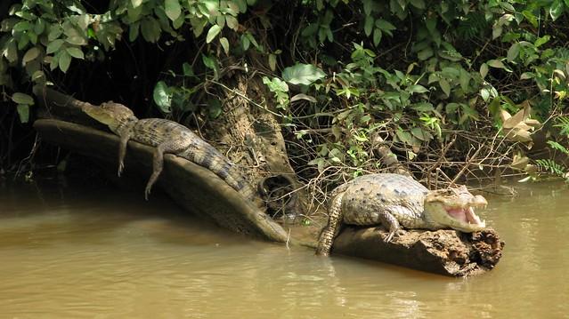 fishing cano negro costa rica