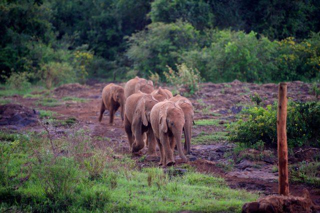 Visit The David Sheldrick Wildlife Trust