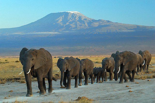 Kenya - A 10 Day Itinerary - amboseli