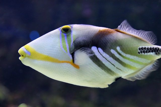 how to attract fish - tiggerfish