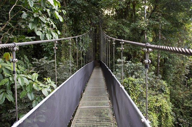 Things To do In Monte Verde - suspension bridges