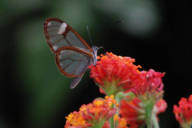 butterfly garden monte verde