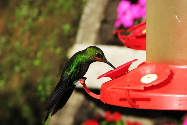 humming bird feeder monte verde