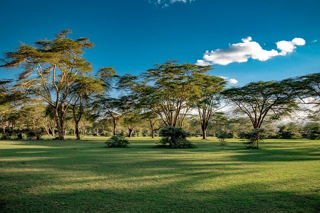 Kenya - A 10 Day Itinerary - lake naivasha