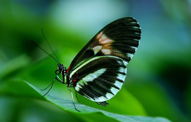 Things To Do In Tortuguero - butterfly garden