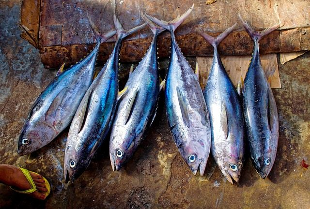 The Most Popular Fish To Eat - tuna