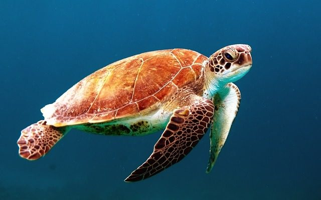 Things To Do In Tortuguero - see turtles