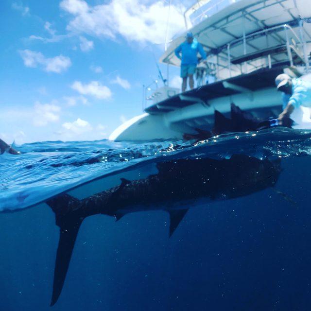 Best Places To Catch Sailfish - Guatemala
