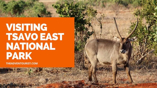 Visiting Tsavo East National Park